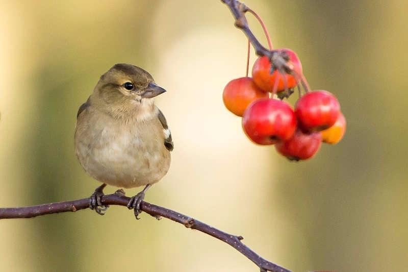 Picture of a beautiful backyard bird